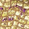 Жаккард VIZANTIYA romb east plum, 6 категория