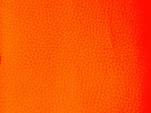 Экокожа Dollaro d529 (3 категория)
